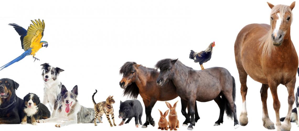 animali & palazzi